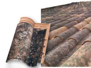 teja-borja-42-altena-steenhandel-gevelsteen-leverancier2